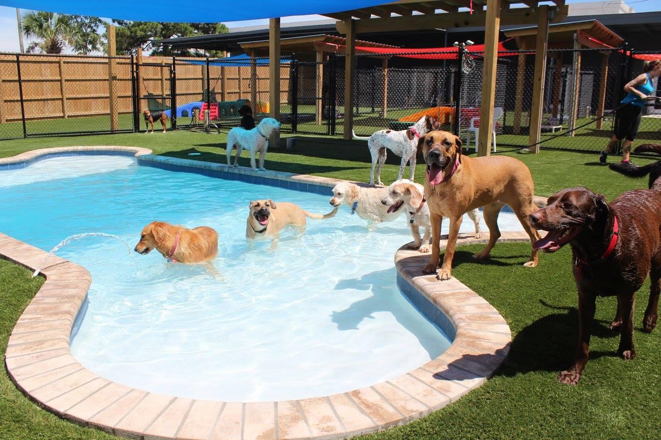 Primo Dog Fort Walton Beach Fl